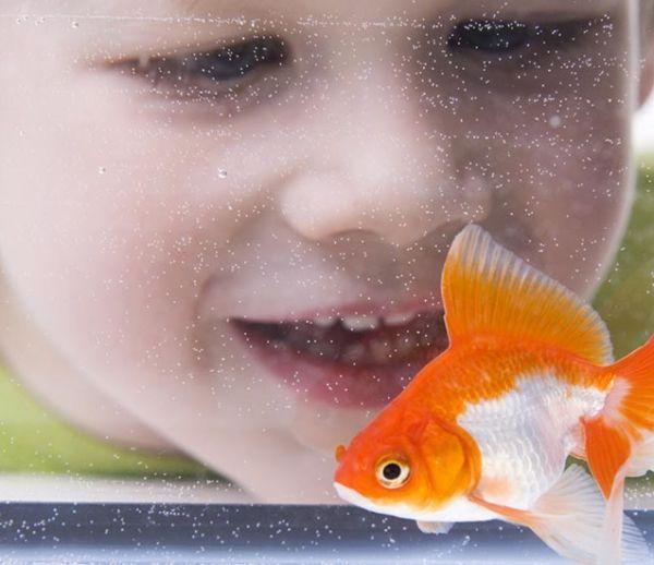 Tous nos conseils pour accueillir un poisson chez soi