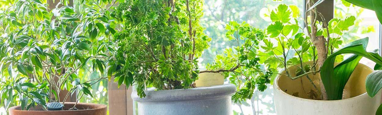 plante-verte