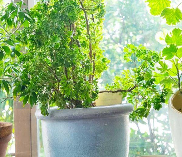 Ensoleillement, humidité... dans quelles pièces devez-vous placer vos plantes ?