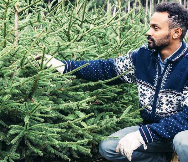 Les sapins de Noël ne perdront bientôt plus leurs aiguilles