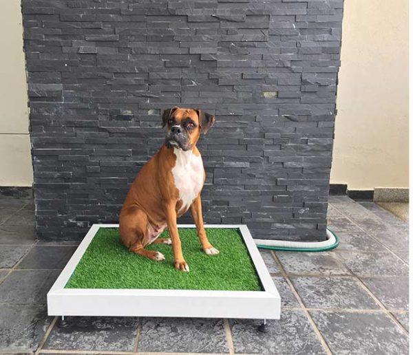 Connaissez-vous la litière pour chien ?