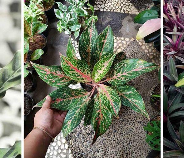 Découvrez la dernière tendance végétale : de surprenantes plantes à motifs