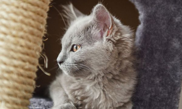 Tuto : 6 arbres à chat DIY à reproduire facilement chez vous