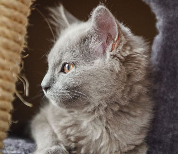 Construire un mur pour chat tag re et perchoir pour chat le tutoriel - Tuto arbre a chat ...