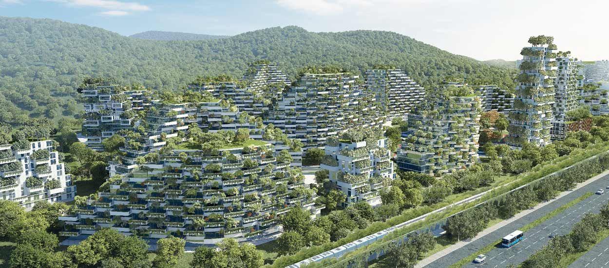 Les arbres vont-ils sauver la ville ?