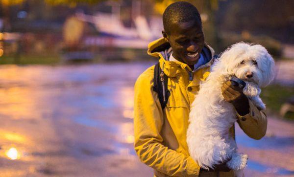 En Angleterre, on alimente des lampadaires avec des crottes de chien !