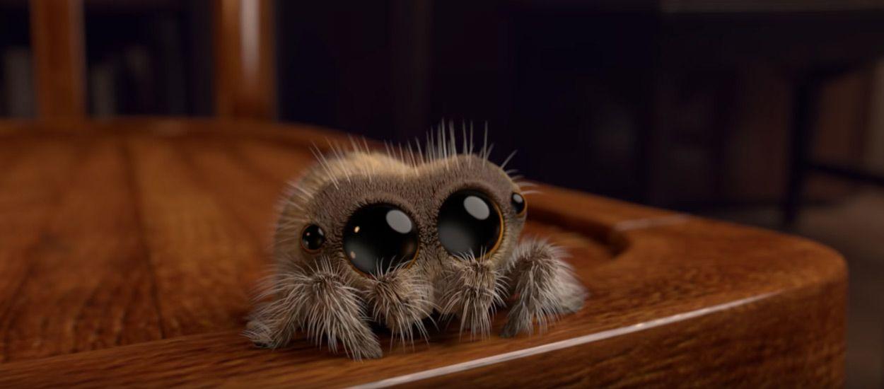 Connaissez-vous Lucas, l'araignée que nous aimerions bien avoir à la maison ?
