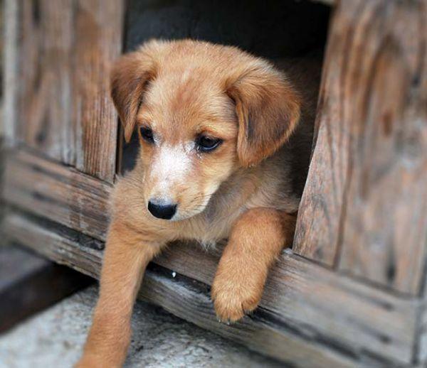 Comment prendre soin de votre chien s'il dort dehors l'hiver ?