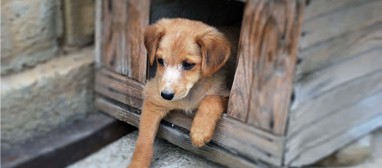 chauffage niche pour chiens faut il chauffer la niche en hiver. Black Bedroom Furniture Sets. Home Design Ideas