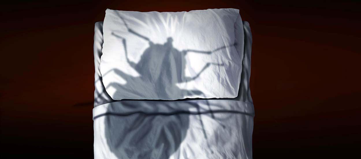 M thodes pour se d barrasser des punaises de lit - Se debarrasser punaise de lit ...