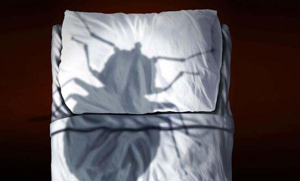 Le guide ultime pour enfin venir à bout des punaises de lit