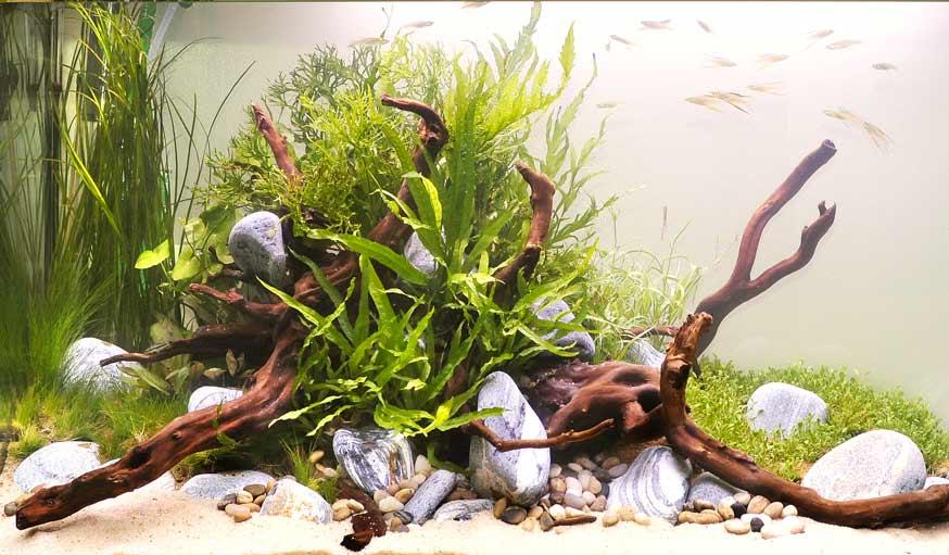 Aquarium : l'aquascaping transforme votre bocal en paysages ...