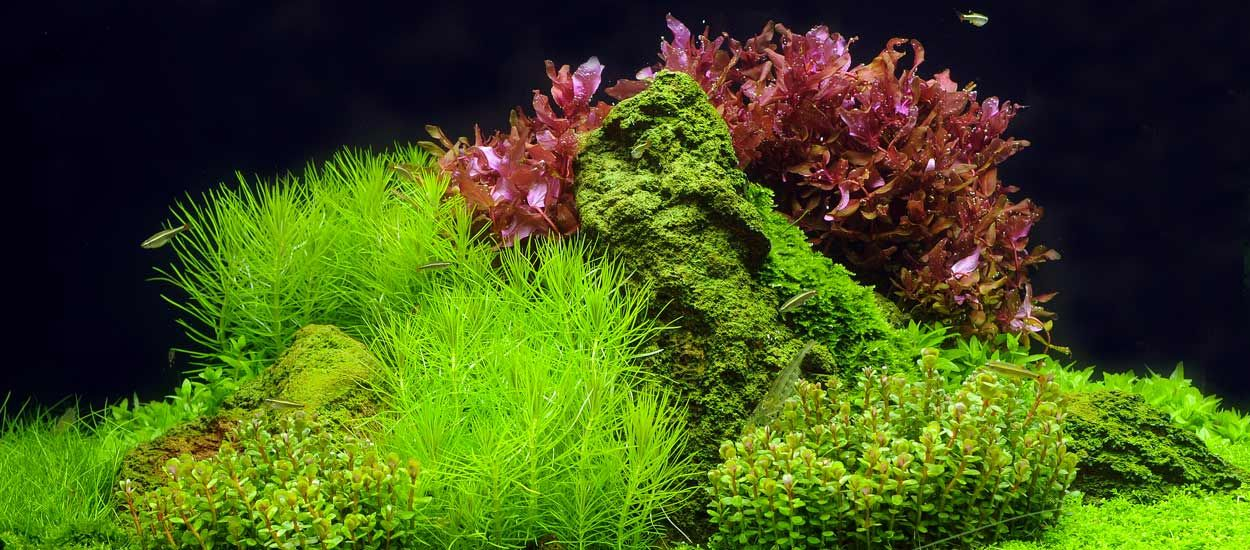 Aquascaping : transformez votre aquarium en paysage naturel !