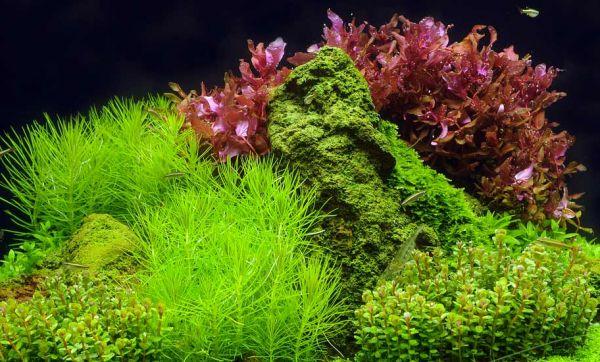 Aquascaping : transformez votre aquarium en paysage naturel !