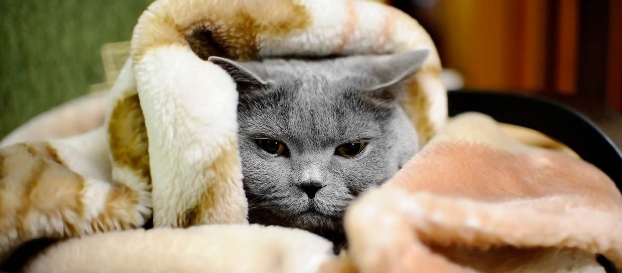 Voici pourquoi vous avez froid chez vous alors que le chauffage est à fond
