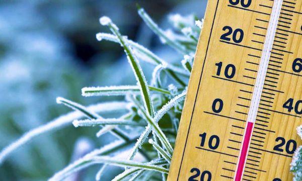 Vague de froid : 9 gestes de dernière minute pour protéger vos plantes d'extérieur