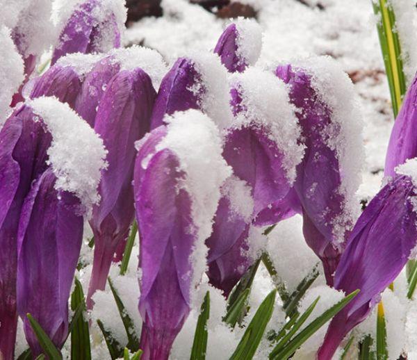 Connaissez-vous les vertus de la neige pour votre jardin ?