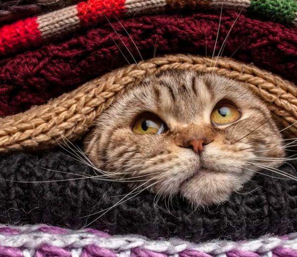 Vague de froid : nos 10 meilleures astuces pour rester au chaud