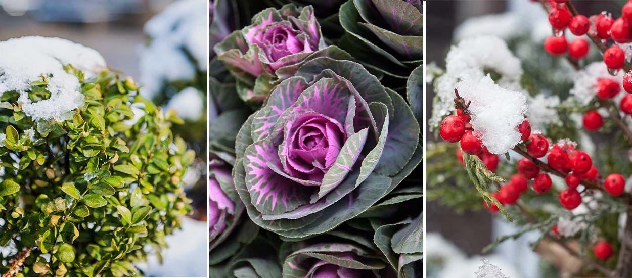 Jardin comment avoir un beau jardin en hiver malgr le for Avoir un beau jardin