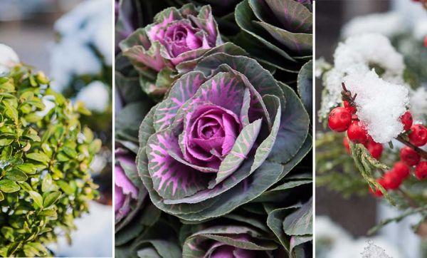 Conseils d'experts pour avoir un beau jardin l'hiver