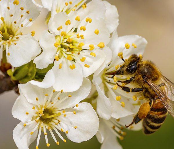 Un mini-hôpital pour sauver les abeilles de la disparition