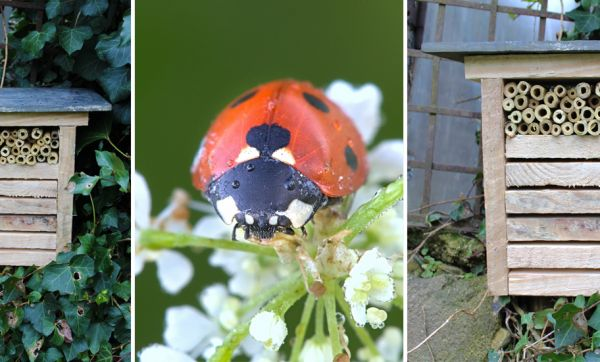 Tuto : Construisez un petit nid à coccinelles pour lutter contre les pucerons