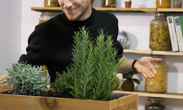 DIY : Fabriquez votre jardin aromatique dans une caisse à vin
