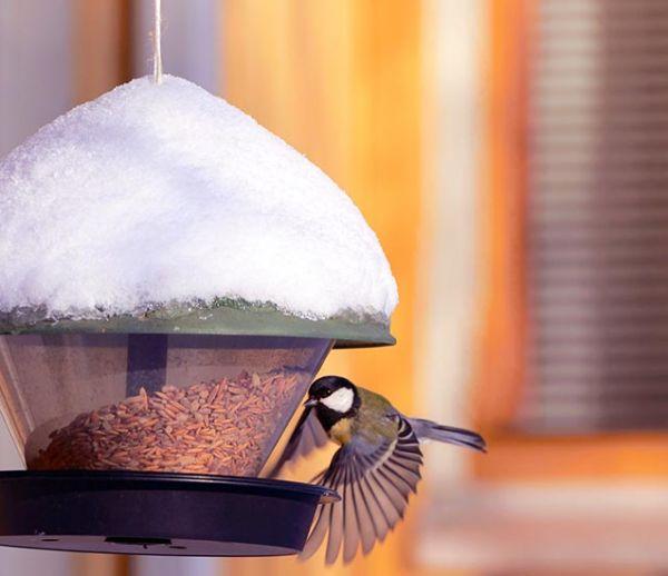 Comment protéger les oiseaux du jardin ? On répond à toutes les idées reçues !