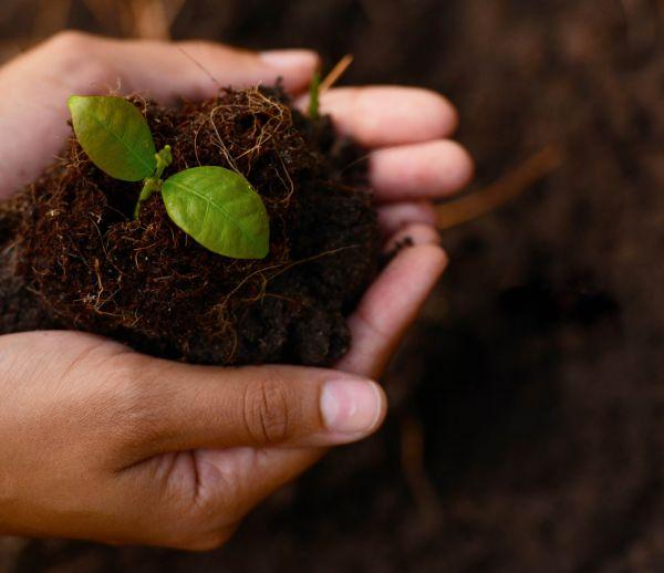 Avis aux passionné-es du jardinage : initiez-vous à la botanique avec ces cours en ligne gratuits