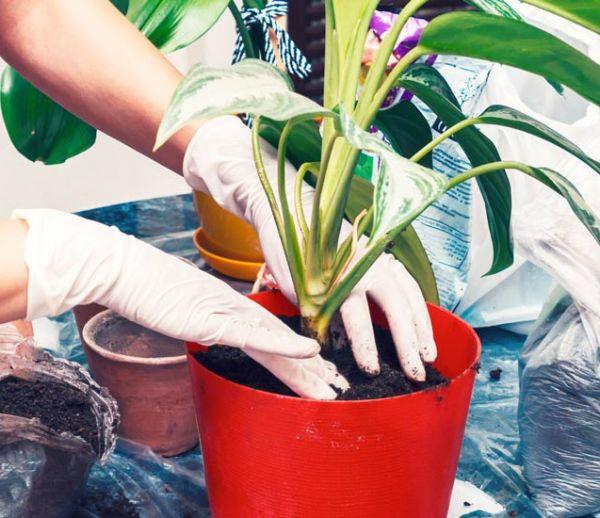 Ne jetez plus vos filtres à café : ils sont les meilleurs alliés de vos plantes d'intérieur !