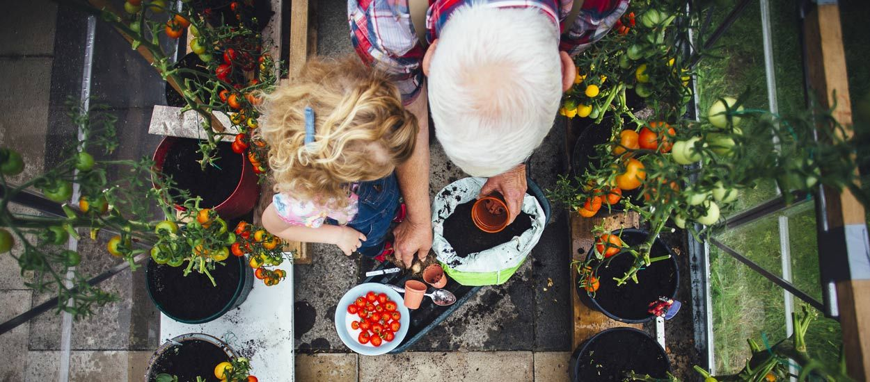 Comment bien réussir vos semis de tomates pour les planter au balcon ?