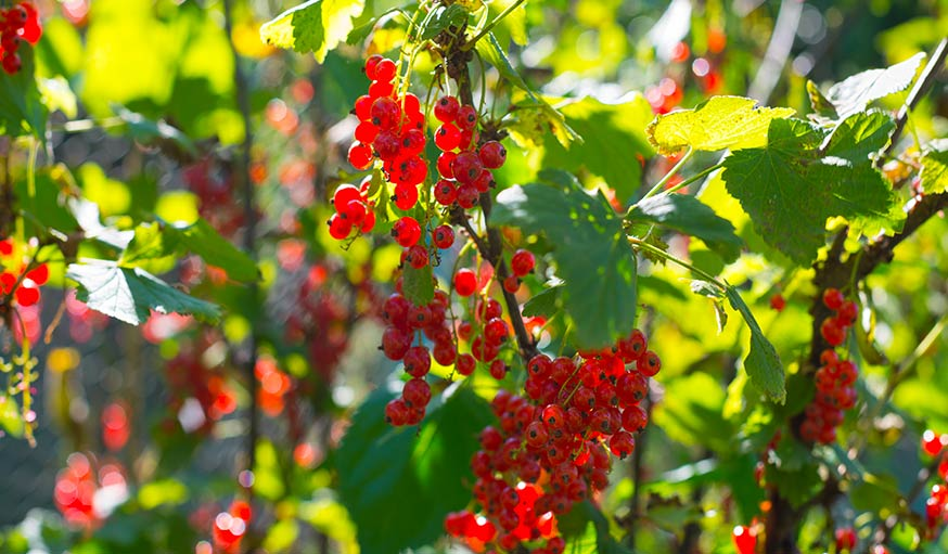 Jardin quels l gumes planter semer ou r colter en mars for Jardin que planter en mars