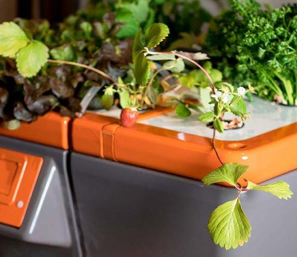 Connaissez-vous l'ultraponie, la nouvelle façon de cultiver les plantes avec des ultrasons ?