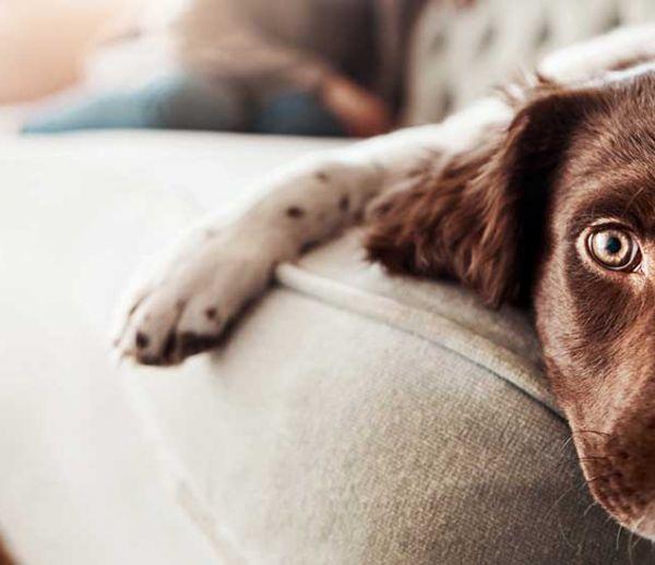 5 conseils de pros pour laisser votre chien seul à la maison quelques heures