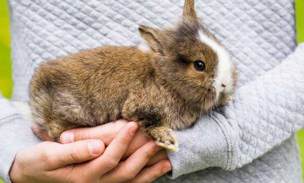 Conseils d'experte pour construire un enclos confortable pour son lapin