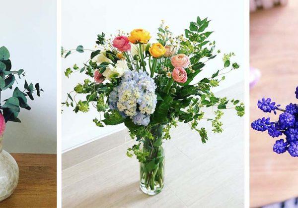 Voici Les Fleurs De Mars 9 Fleurs De Saison A Choisir Au Printemps