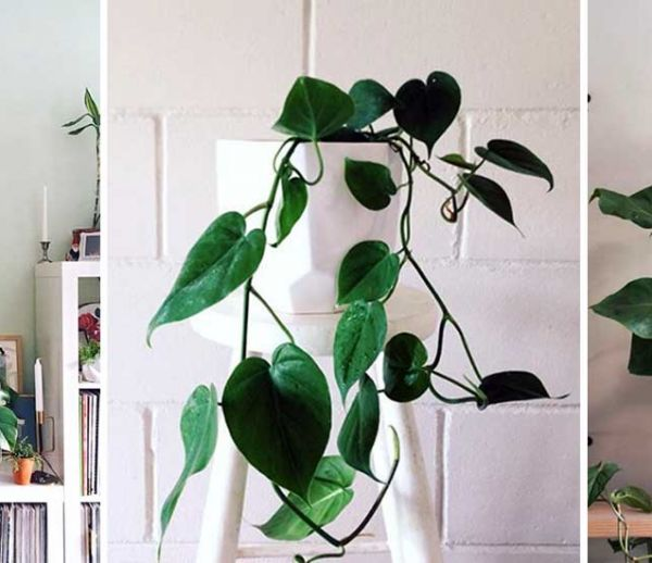 Ces 21 photos Instagram vont vous donner envie d'adopter un philodendron !