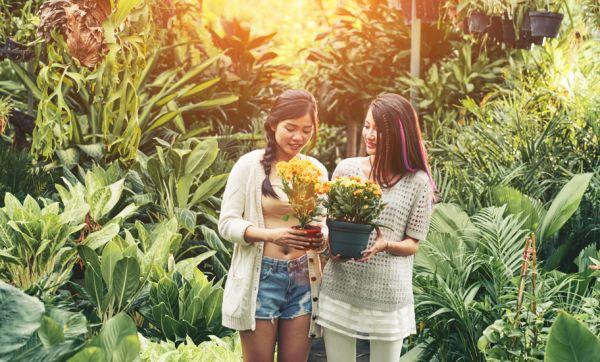 3 choses à vérifier absolument avant d'acheter vos plantes en magasin