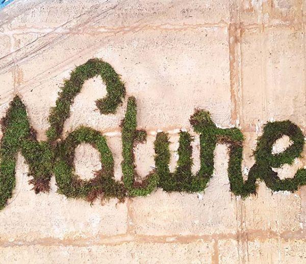 Tuto : Fabriquez un graffiti végétal pour une déco tendance et nature !