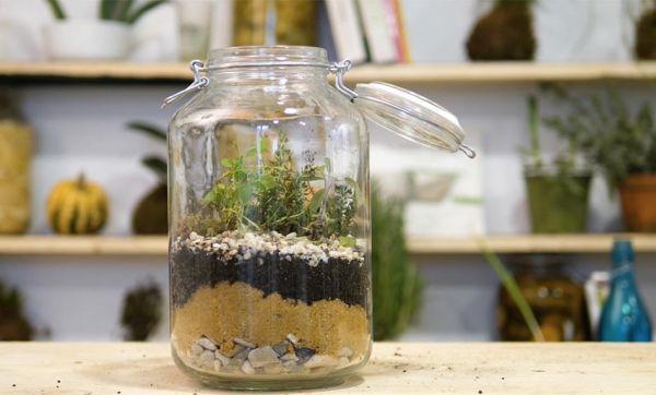 Tuto : Fabriquez un terrarium pour vos aromates !
