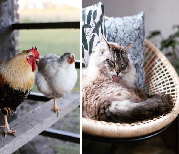9 idées d'aménagement à piquer dans l'incroyable maison de cette amoureuse des animaux