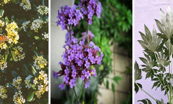 Quelles plantes choisir pour avoir une belle terrasse toute l'année ?
