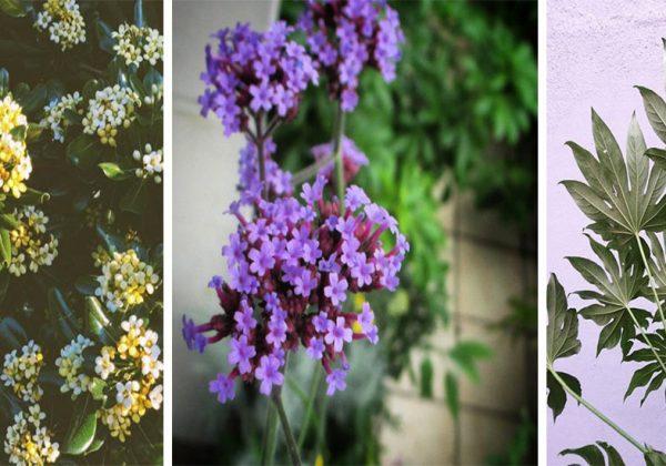 Terrasse Quelles Plantes Resistent Au Vent A L Ombre
