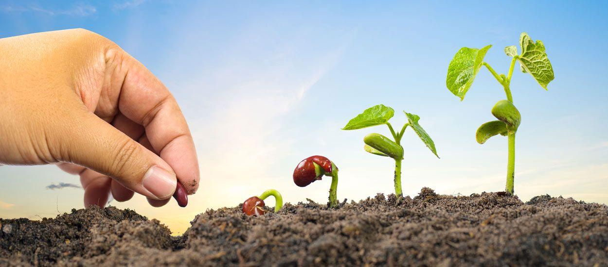 Une bonne camomille et quelques caresses, la solution miracle pour faire pousser vos plantes ?
