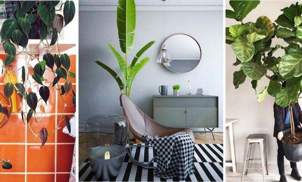 10 plantes XXL à adopter d'urgence pour verdir votre intérieur