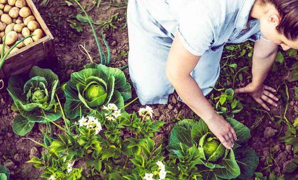 Fongicides naturels : Recettes écolos pour protéger vos fleurs et légumes des champignons