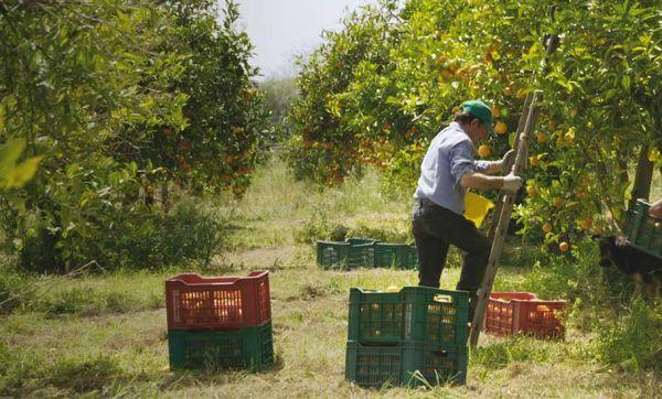 Agriculteurs, artisans, architectes : ils résistent pour sauver leur campagne