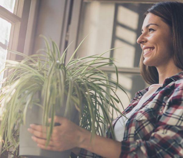 La fin d'un mythe : non, les plantes ne dépolluent pas l'air intérieur de votre maison !