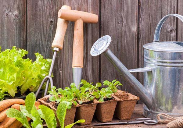 Calendrier Pour Planter.Jardiner Au Potager En Mai Quels Fruits Et Legumes Semer