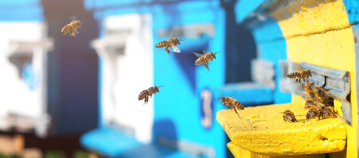 7 conseils pour installer une ruche dans son jardin